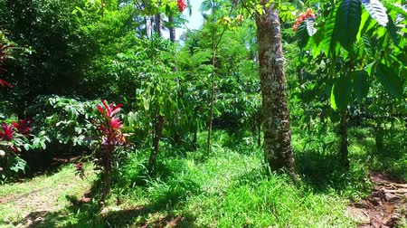 Tropical nature on Java Indonesia
