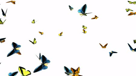 tridimensional : Looping Butterflies Fast Swarm Animation