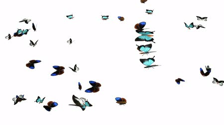 rovarok : Looping Butterflies Fast Swarm Animation