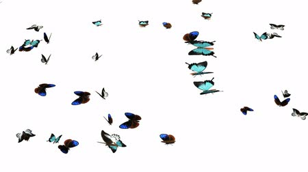 pillangó : Looping Butterflies Slow Swarm Animation
