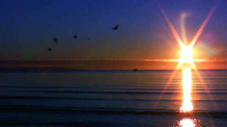 fall down : Sunset over the sea 2 Stock Footage
