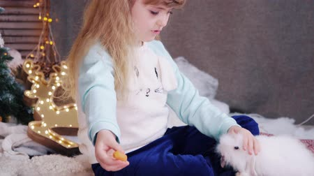 enrolar : Happy cute blonde little girl is feeding the white rabbit a carrot.