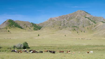долина : Herd of horses and cows in the mountains