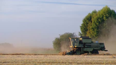 dożynki : Ripened buckwheat being gathered by combine harvester