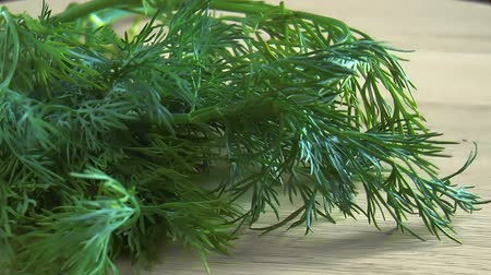erva doce : Bunch fresh green dill. Food background. Close up rotation Vídeos