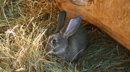 Rabbit eat grass. Nature background