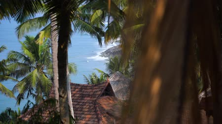 View of the varkala beach coast with its amazing palm trees, South of India, Kerala