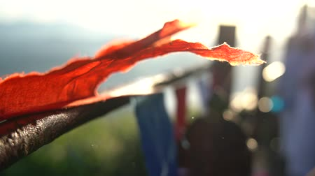 prayer flag : Buddhist prayer flags swaying in the wind at sunrise in a temple in Sri Lanka. Close up Slow Motion Footage. Shallow depth of field,