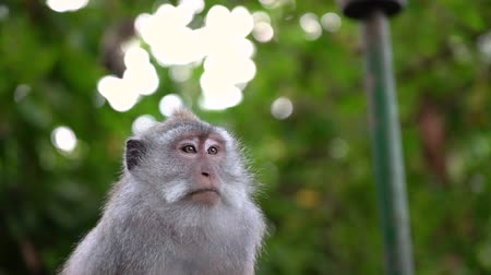 Monkey looking around quietly with a curious look. Shot with a nice shallow depth of field.