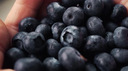 antioksidan : Blueberries in a womans hands. Handful of blueberries getting poured down from female hands. slow motion