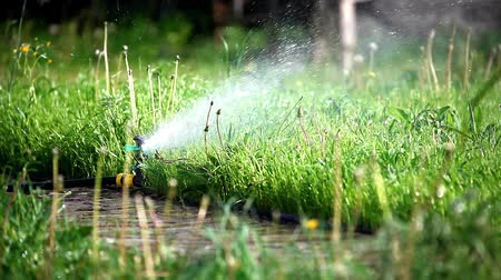 sprinkler in a garden