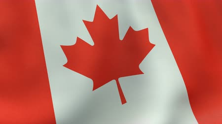 kanadai : Loopable waving Canadian flag animation Stock mozgókép