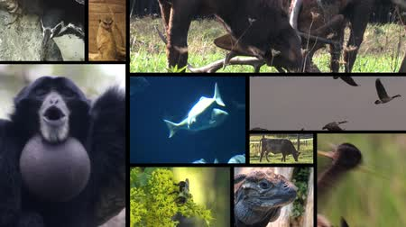 seqüência : A composition of multiple animals shots, which transition into and out of frame. Each window itself is edited with multiple animal shots.