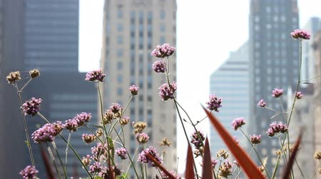 yabanarısı : Close up of flowers and a bee, with the dramatic contrast of skyscrapers in the background