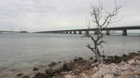 chaves : A single dead tree on a rocky shore, with two overseas bridges disappearing in the distance (florida Keys)