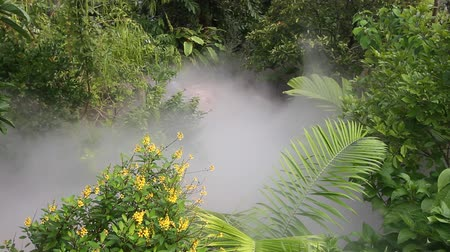 selva tropical : Niebla en movimiento a través de una densa selva tropical Archivo de Video