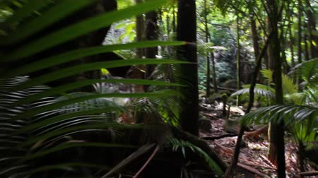 yemyeşil bitki örtüsü : Point-of-view shot, moving slowly through a lush tropical rain forest (Hawaii)