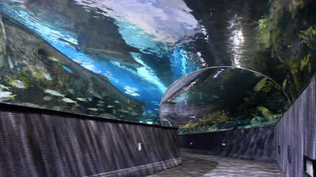 korál : Sharks and other fish swimming in large aquarium with a walk-through tunnel