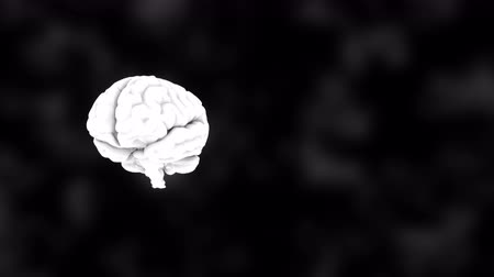neuro : 3D human white brain on black, science anatomy background, 3D rendering backdrop