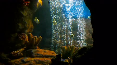 escalera : Tropical beautiful fishes swim in hole with rising bubbles in big aquarium Stock Footage
