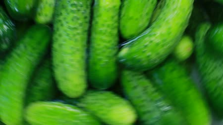 zöldségek : Cucumbers At The Farm Washing Machine