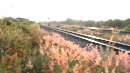 sararmış : beautiful view on railroad in morning in focusing