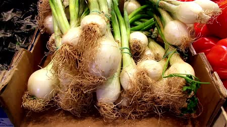 soğancık : Close up image of spring onions as one of the major seasoning of your favorite foods like roasted pigs and chicken. Stok Video