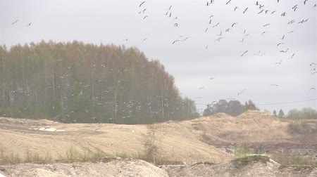 fosilní : Lots of birds flying in the sky in a mining industry Dostupné videozáznamy
