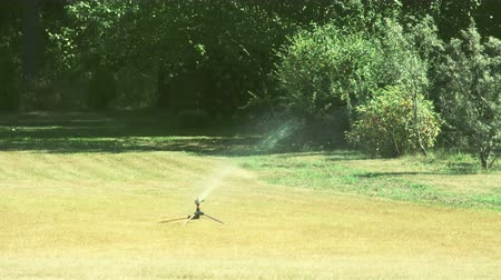 irrigação : A grass sprinkler putting some water on the bermuda grass. It continously sprinkles water while turning around the yard 4K