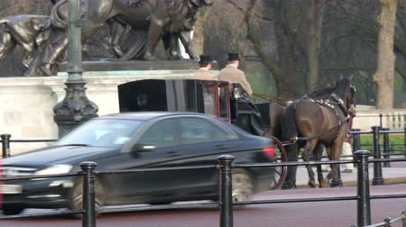 buckingham palace : A horse carriage with a lady and a man on it. Travelling on the street of the London in 4K UHD Stock Footage