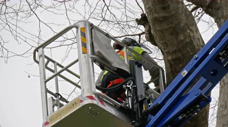 public worker : A man in uniform inside a crane is cutting a branch of a tree. The old tree has no leaves on it. in 4K UHD