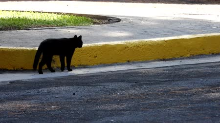 prowl : Just one of the many stray cats left behind in the country of Italy.