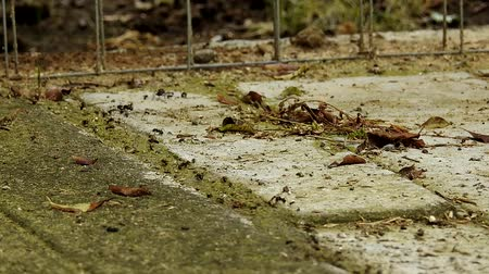 ant : A time lapse of an army of ants moving across dry garden stones.