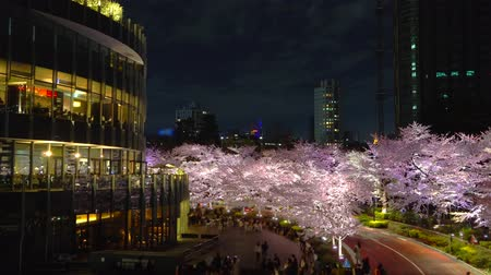 [4K recording, no sound] Japanese spring Tokyo city scapes [Night cherry blossoms in Tokyo Midtown]