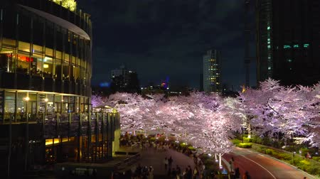 [4K recording, no sound] Japanese Spring Tokyo City Scapes [Night Cherry Blossoms in Tokyo Midtown] [Zoomin] Stock mozgókép