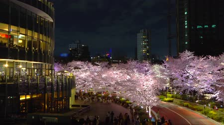 [4K recording, no sound] Japanese spring Tokyo city scapes [Night cherry blossoms in Tokyo Midtown] [zoomout] Stock mozgókép