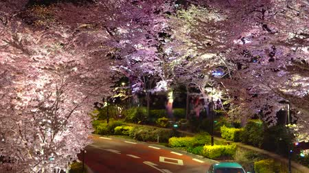 [4K recording, no sound] Japanese Spring Tokyo City Scapes [Night Cherry Blossoms in Tokyo Midtown] [Zoomout]