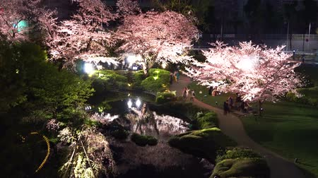 освещенный : [4K recording, no sound] Japanese spring Tokyo city scapes Roppongi Hills night cherry blossoms [zoomin]