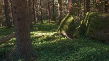 mossy forest : huge stones, sun casting long shadows in forest, motion time lapse