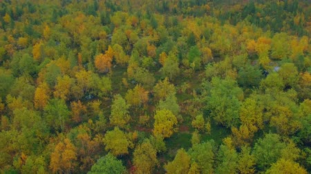 liken : Aerial View.Flying over Autumn forest.