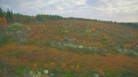 arctic tundra : Northern nature.Flying above the autumn tundra
