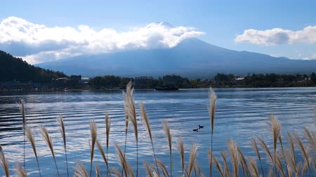 snow on grass : Slow motion of grass flowers and Fuji mountain with blue sky and white cloud at Kawaguchiko Lake, Yamanashi, Japan Stock Footage