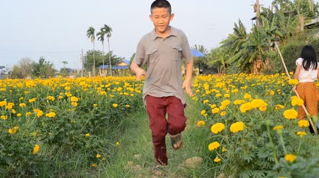 calendula officinalis : Boy running at marigold flower field