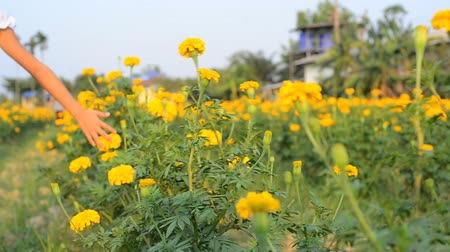 calendula officinalis : Asian girl touching and running at marigold flower field