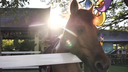 Horse in stable outdoor with rim light, slow motion.