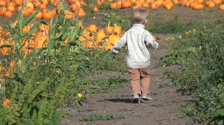 Happy boy running to choose pumpkin at the farm field