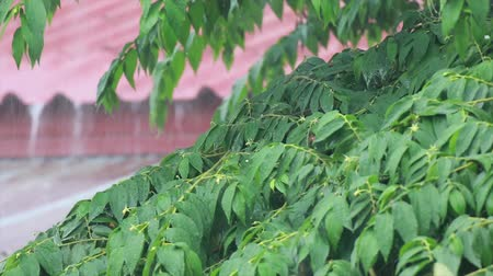 monção : Rain on old zinc roof rainy season