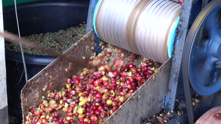 peeler : Peeler Raw coffee beans by Stripping machine used in the countryside Thailand.