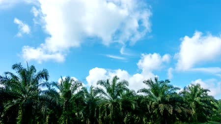 mozgás : Time lapse, Motion white clouds against blue sky over palm tree for a background. Video 4K