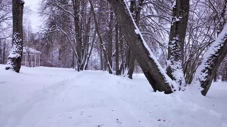 neve : Beautiful winter landscape in the park Mazurino Vídeos